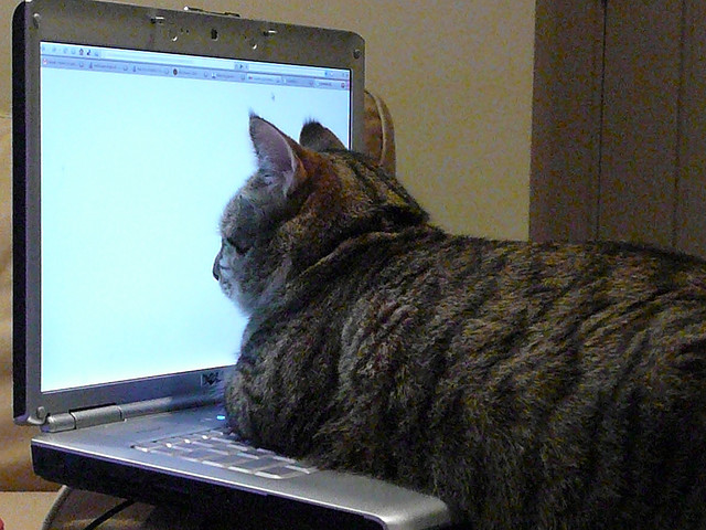 Cat reading online