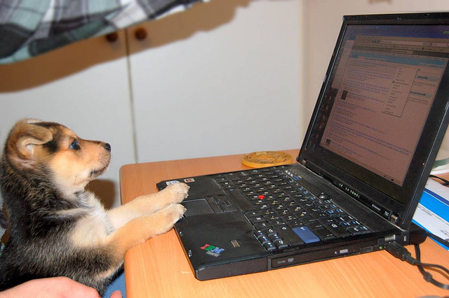 A dog at a laptop