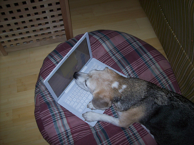 Dog reading on a computer