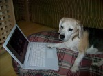 Dog reading online
